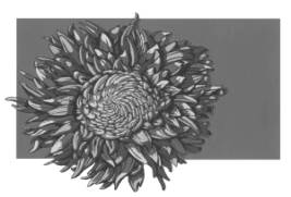 essay on chrysanthemums by john steinbeck